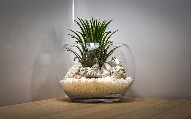 Terrariums help in reducing stress and anxiety