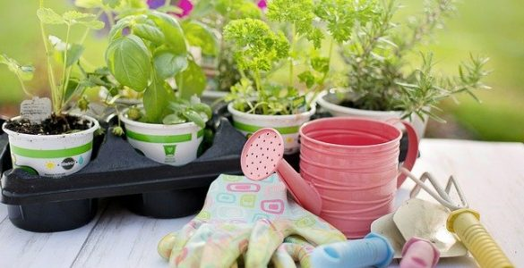 5 Essential Gardening Tools for Beginners