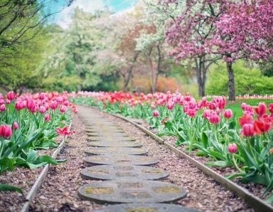 Gardening Tips for Beginners - Kitchen Gardening Tips - Balcony Gardening Tips - Container Gardening Tips