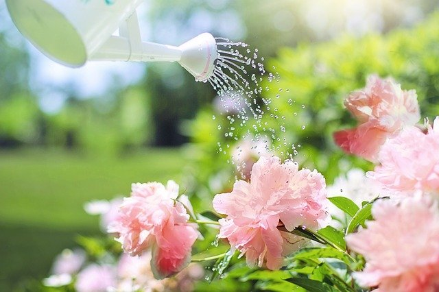 Watering Can - Essential Gardening Tools for Beginners