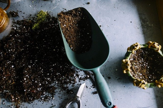 When to repot your plant