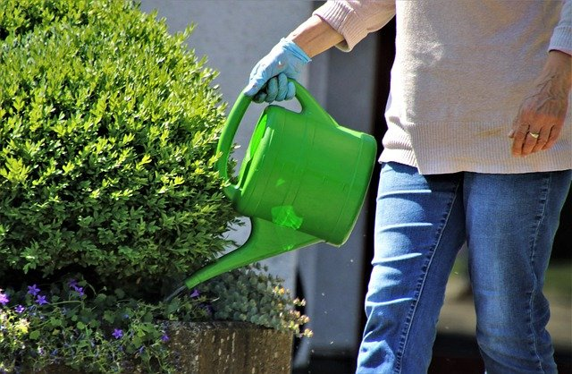 adequate watering of plants