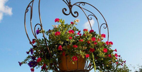 Best Plants for Hanging Baskets