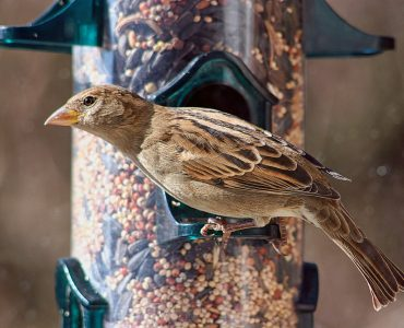 How to Attract Birds to your Gardens and Balconies: List of Plants that Attract Birds